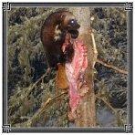 Satanic Warmaster - ...Of The Night LP